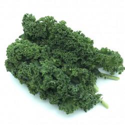 Kale Rizado