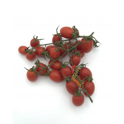 Tomate Cherry Lobello