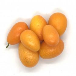 Kumquat Chinensis